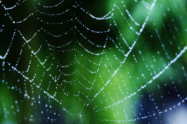 夢占い「蜘蛛の巣」の夢の診断結果