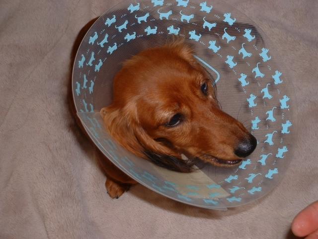 夢占い「犬が怪我をしている」という夢の診断結果
