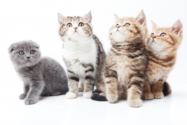 夢占い「猫がたくさん出てくる」夢の診断結果5選