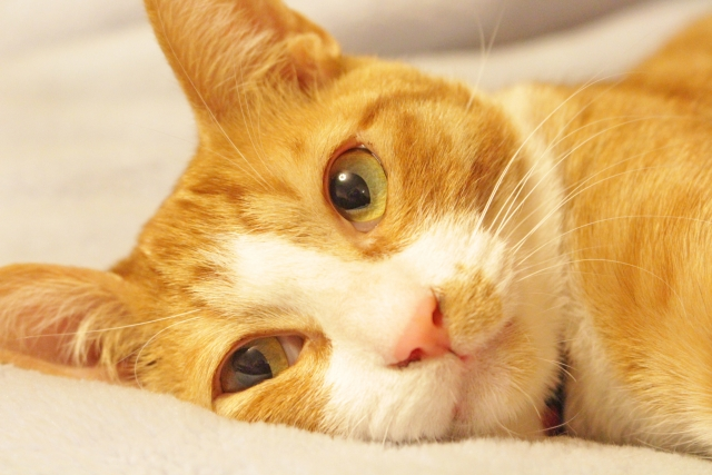 夢占い「猫が死ぬ」という夢の診断結果