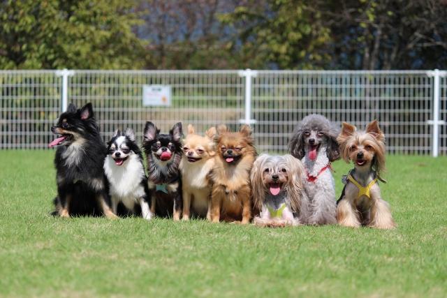 夢占い「たくさんの犬」の夢の診断結果