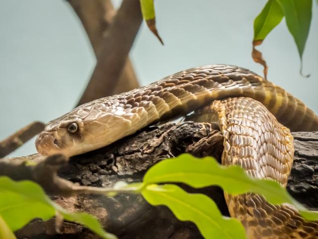 夢占い「蛇に噛まれる」という夢の診断結果