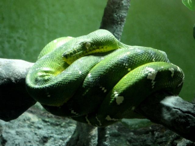 夢占い「緑の蛇」の夢の診断結果