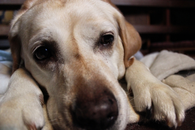夢占い「犬に噛まれる」という夢の診断結果