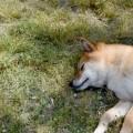 夢占い「犬が死ぬ」夢の診断結果