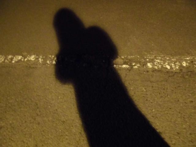 夢占い「幽霊が憑依する」という夢の診断結果
