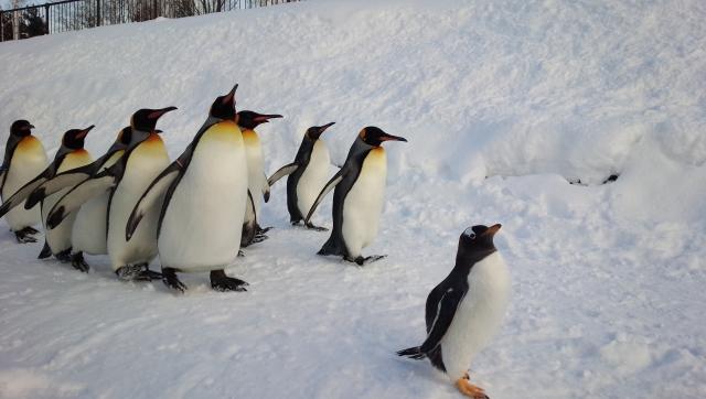 夢占い「ペンギン」の夢の診断結果