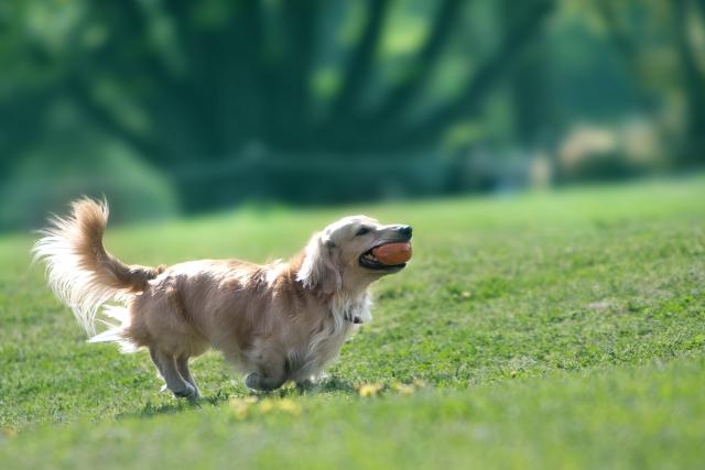 あなたは「犬を飼う」という夢を見たことはありますか?  私たちにとって、犬は一番身近な動物と言えますよね。  では、夢の中で「犬を飼う」というのは。どのようなメッセージがあるのでしょうか??  そこで今回はこの夢を、夢占いで診断していきます。