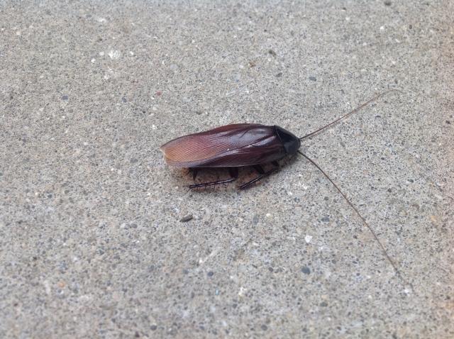 夢占い「ゴキブリを退治」という夢の診断結果