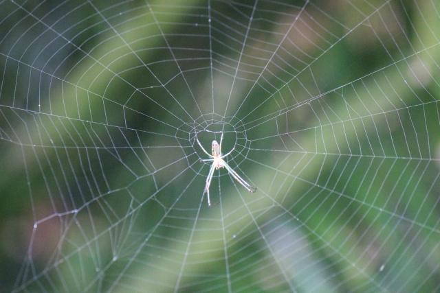 夢占い「白い蜘蛛」に関する夢の診断結果