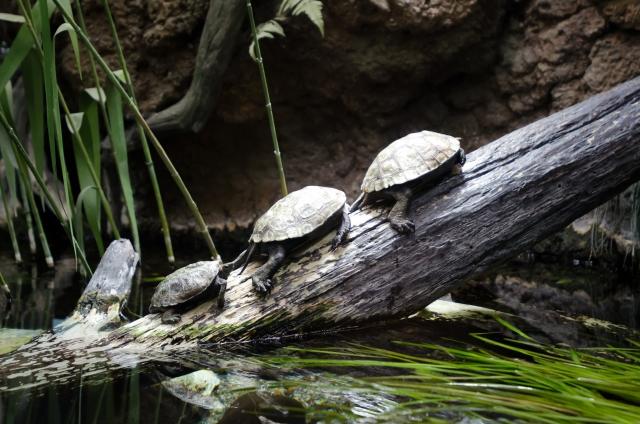 夢占い「たくさんの亀」に関する夢の診断結果