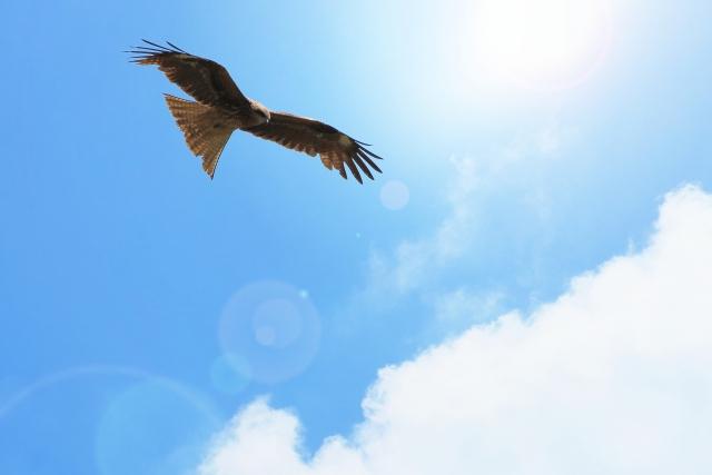 夢占い「大きな鳥」の夢の診断結果