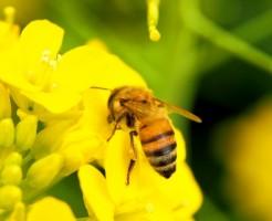 夢占い「蜂を退治する」夢の診断結果