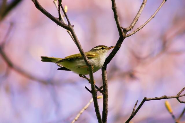 夢占い「小鳥」の夢の診断結果