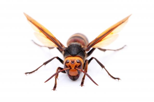 夢占い「蜂に刺される」という夢の診断結果