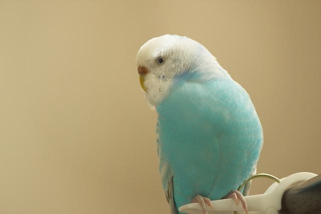 夢占い「青い鳥」の夢の診断結果