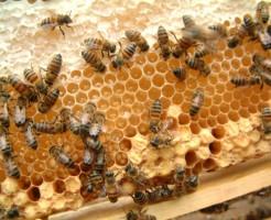 夢占い「蜂の大群」の夢の診断結果