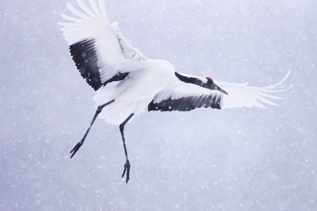 夢占い「白い鳥」に関する夢の診断結果