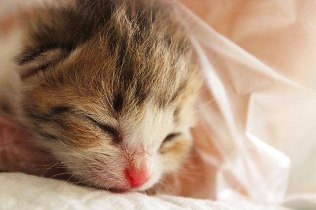 夢占い「子猫を拾う」夢の診断結果