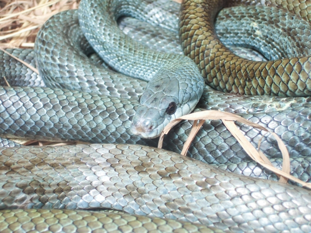 夢占い「青い蛇」の夢の診断結果