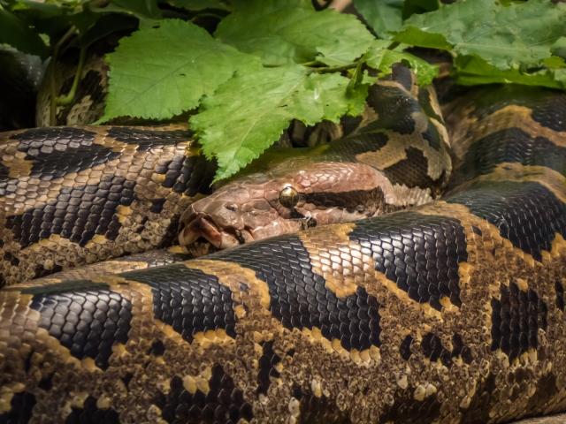 夢占い「大蛇」の夢の診断結果