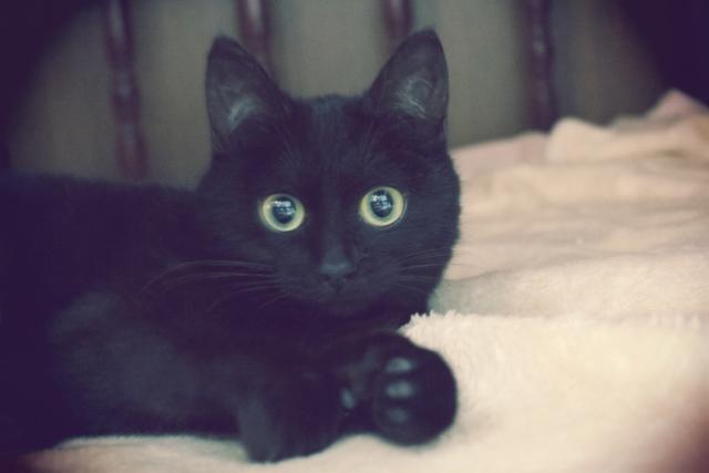 夢占い「黒猫」の夢の診断結果