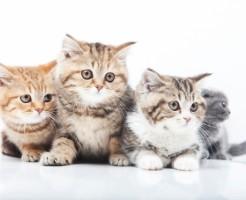 夢占い「子猫がたくさん」の夢の診断結果