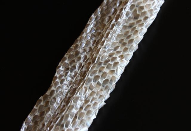 夢占い「蛇が脱皮する」という夢の診断結果