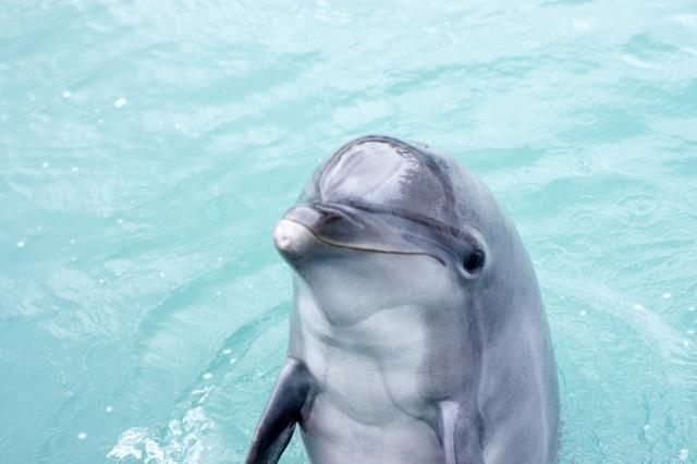 夢占い「イルカ」に関する夢の診断結果