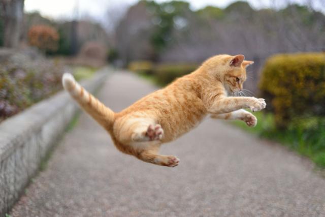 夢占い「猫が逃げる」夢の診断結果