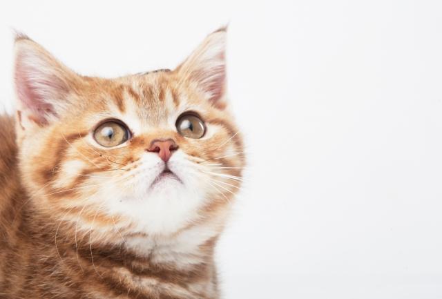 夢占い「子猫を助ける」夢の診断結果