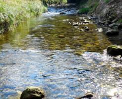 夢占い「川で泳ぐ」夢の診断結果