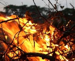 夢占い「山火事」に関する夢の診断結果