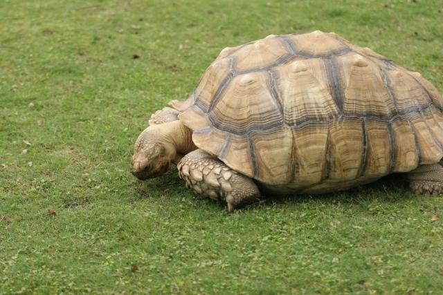 夢占い「亀を飼う」夢の診断結果