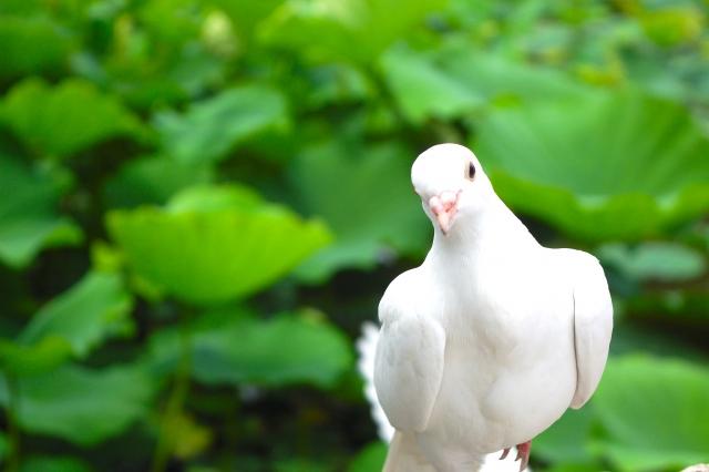夢占い「鳥を捕まえる」夢の診断結果8選