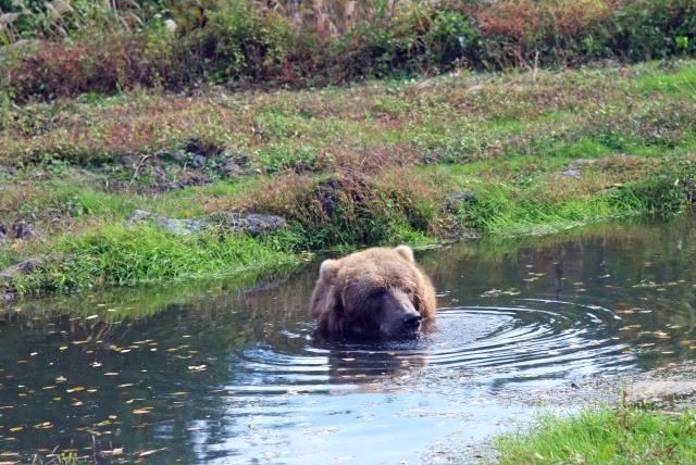 夢占い「小熊」に関する夢の診断結果