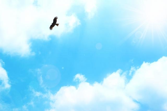 夢占い「鳥に襲われる」夢の診断結果8選