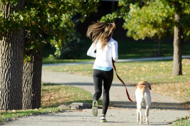 夢占い「犬の散歩」に関する夢の診断結果9選