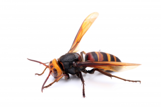 夢占い「スズメバチ」に関する夢の診断結果9選