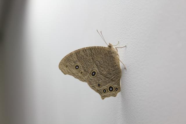 夢占い「蛾」に関する夢の診断結果9選