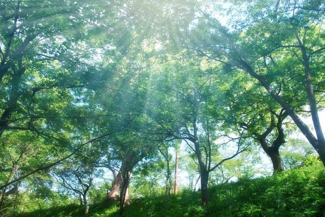 夢占い「森」に関する夢の診断結果10選
