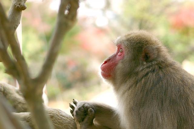 夢占い「猿」に関する夢の診断結果