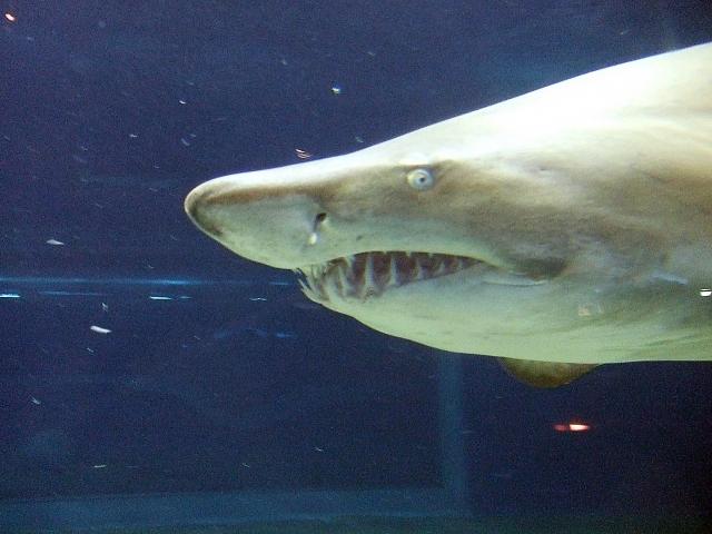 夢占い「サメ」に関する夢の診断結果11選