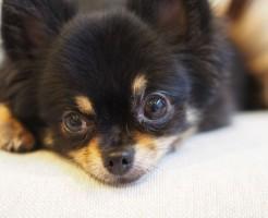 夢占い「黒い犬」に関する夢の診断結果8選