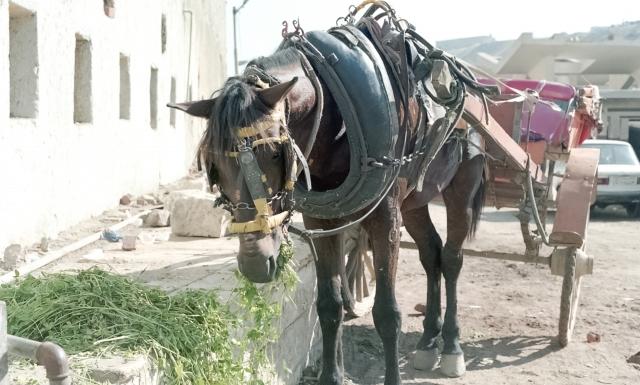 夢占い「馬車」に関する夢の診断結果