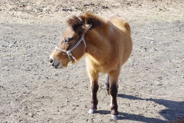 夢占い「子馬」に関する夢の診断結果