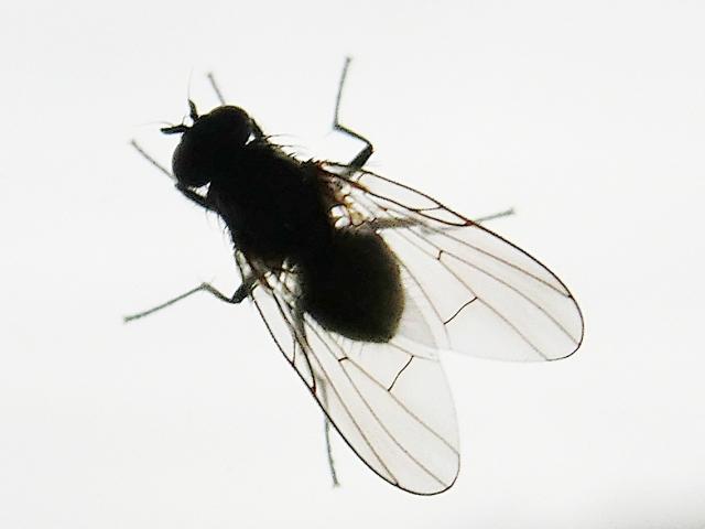 夢占い 「虫の死骸」に関する夢の診断結果8選