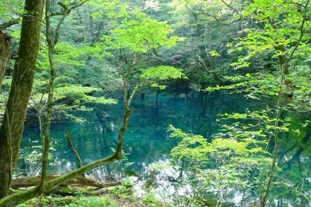 夢占い「池」に関する夢の診断結果