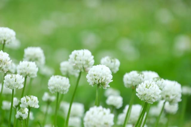 夢占い「白い花」に関する夢の診断結果