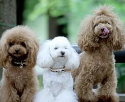夢占い「たくさんの子犬」に関する夢の診断結果